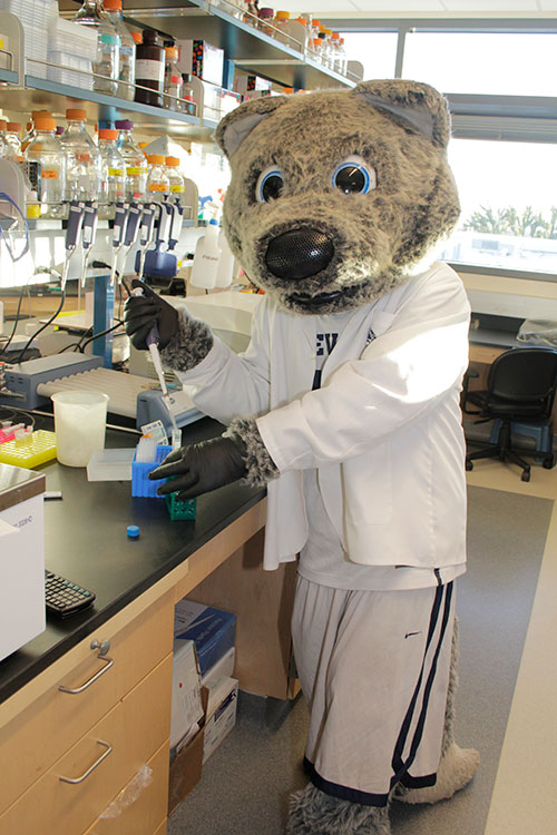 Wolfie in a science lab