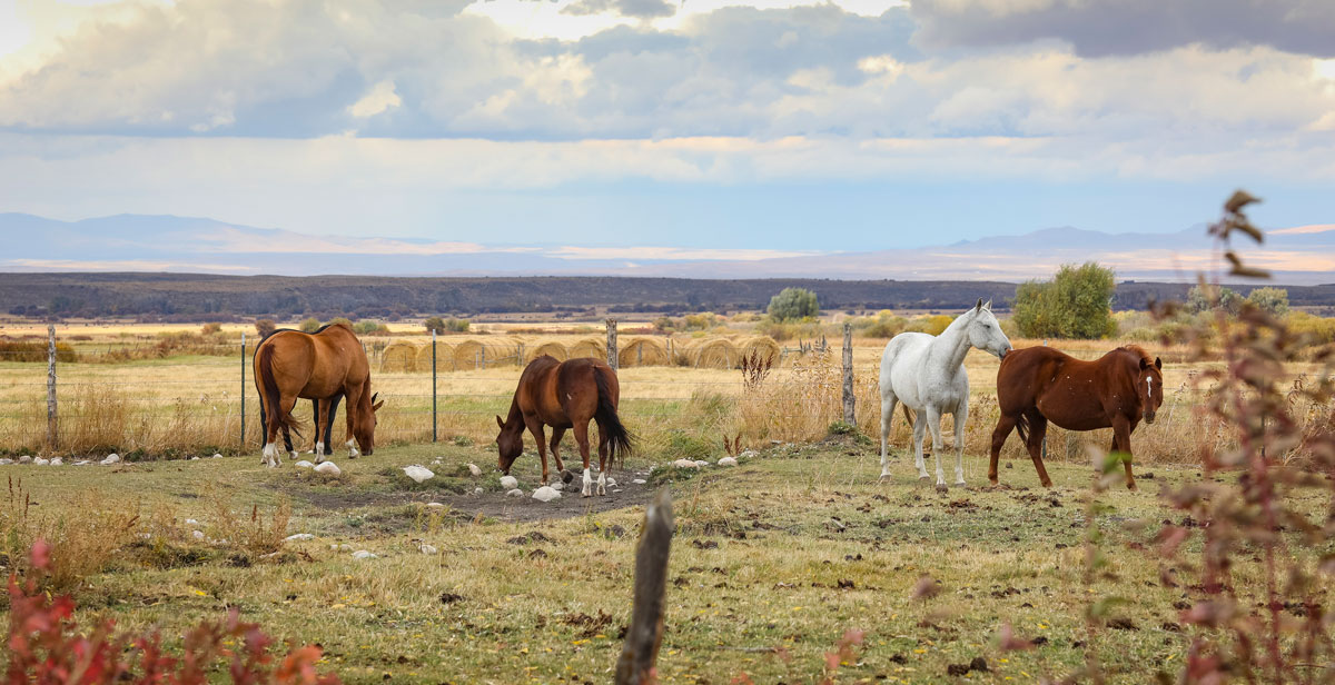 Horses in a elko nv pasture