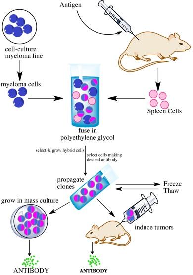 Cellular imaging system