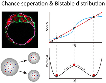 chance separation and bistable distribution
