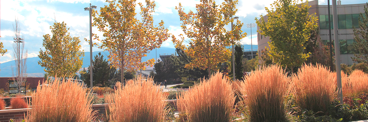 Fall at UNR Med